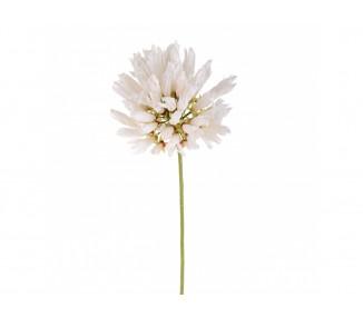 Agapantus 80 cm White bianco